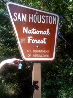 Tommy Tee Visits the Sam Houston National Forest
