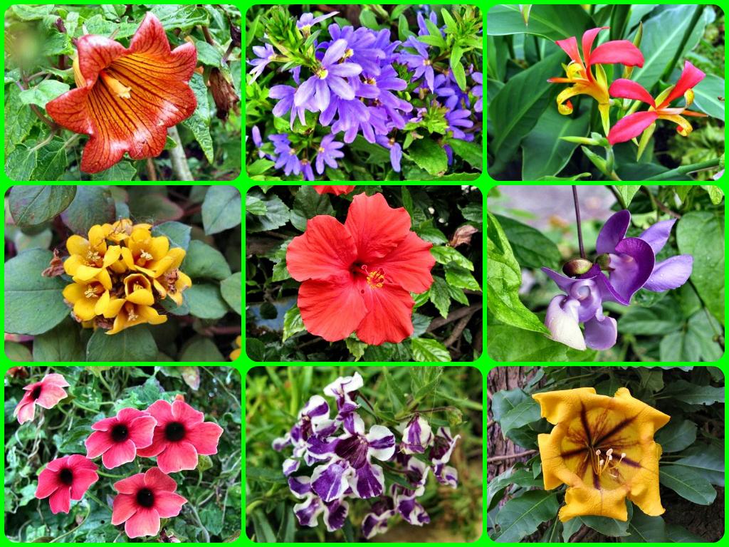 plantas jardins tropicais : plantas jardins tropicais:GC4X2WQ Ilha Florida (Unknown Cache) in Arquipélago da Madeira