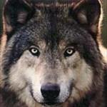 Wolf Grrl