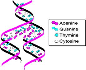 genetika1