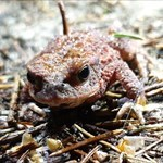 Froggie-Quick