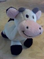 Dutch Little Cow -- ready to make new friends !