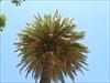 07 palmeira log image