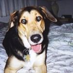 lukerdog