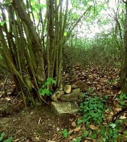 Steine an Bäumen