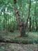 Rea's Wood Near where the cache was found