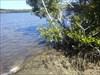 The TB's near GZ Coastal mangroves