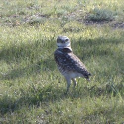 Seen guarding a cache!