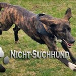 Nicht-Suchhund