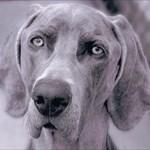 spelldog