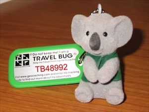 Geo_koala