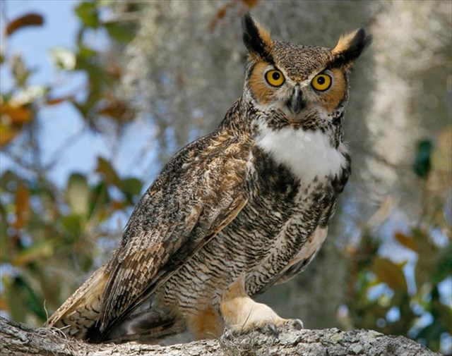 GC5B5RP Iowa Creatures of the Night #2-Great Horned Owl ...