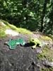 Découverte de Froggy Froggy à l'endroit de sa découverte