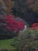 Autumn at stourhead One of the many trees at Stourhead Gardens https://www.nationaltrust.org.uk/stourhead