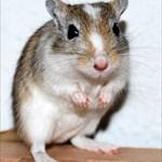 Mystic-Mouse