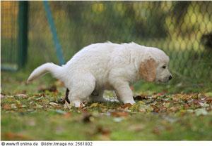 A dog discharging its duty