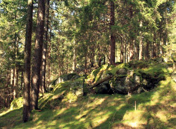 V lese na Sedle