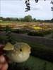 Dutch summer flower field