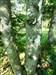 Zaun im Baum