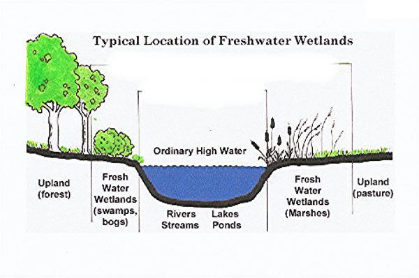 diagram of wetland a diagram of an atom of chromium #5