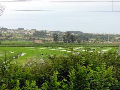 Vista sobre os campos de Arroz