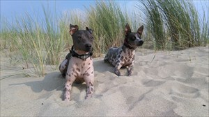 cache-doggies Joey & Donna