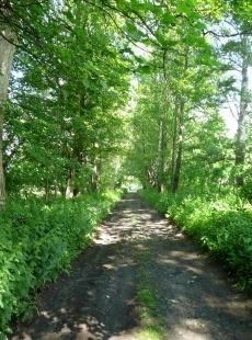 Cesta od Dobronína