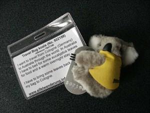 TB koala