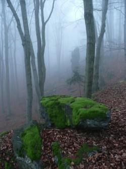 Mech na kameni