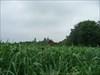 djemba steht das gras bis zum hals