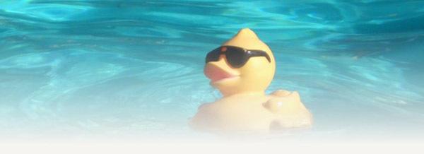 Mr Ducky dans sa piscine