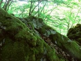 FOTO: steine auf moos-fels, hier liegt der schatz