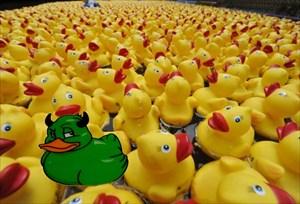 c2ic - Envy Ducks Tag
