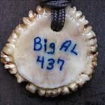 BigAl437
