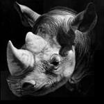 Rhinode