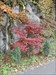 Grandiose Herbstfarben