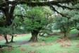 Madeira - Magic Forest