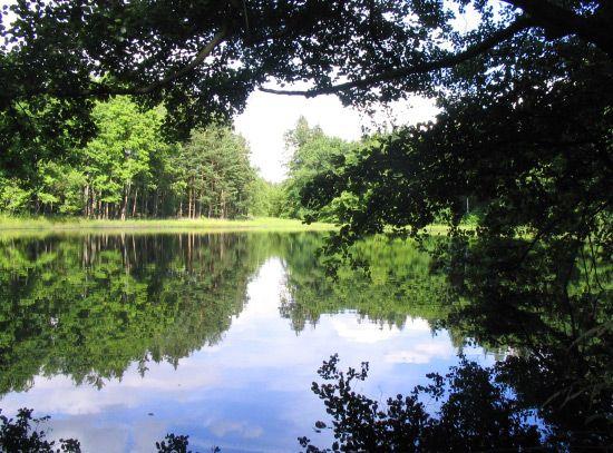 Rybníček/Pond