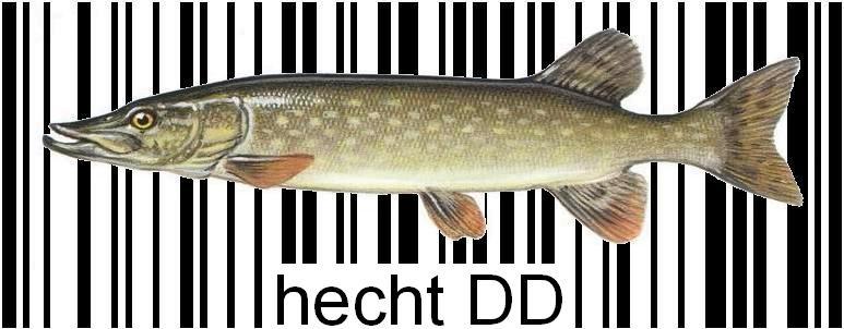 HECHT DD