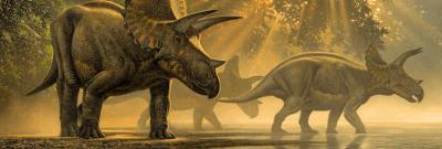 Triceratopsi v bazine