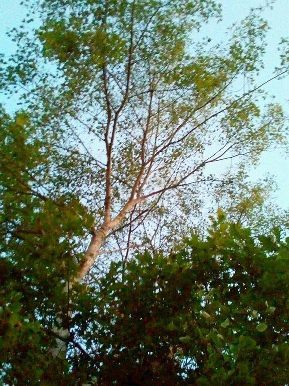 Baum überm Cache