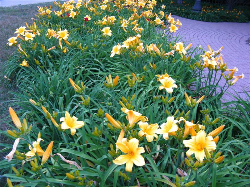 GateWay Park Flowers
