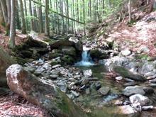 Kamenité dno potoka