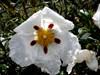 Flor - pormenores