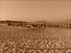 #0129 - GC19BMZ - A cache da Joana 01