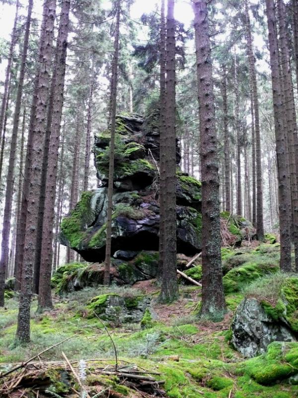 strazce lesa