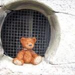 Fredward Bear