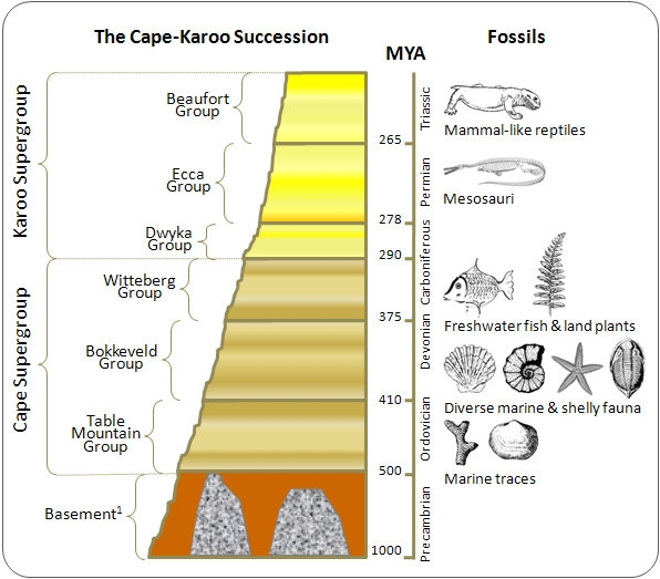 Fossil succession relative dating