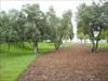 Parque do Tejo (Expo) II