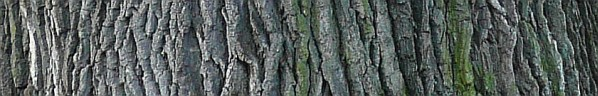 Kůra dubu